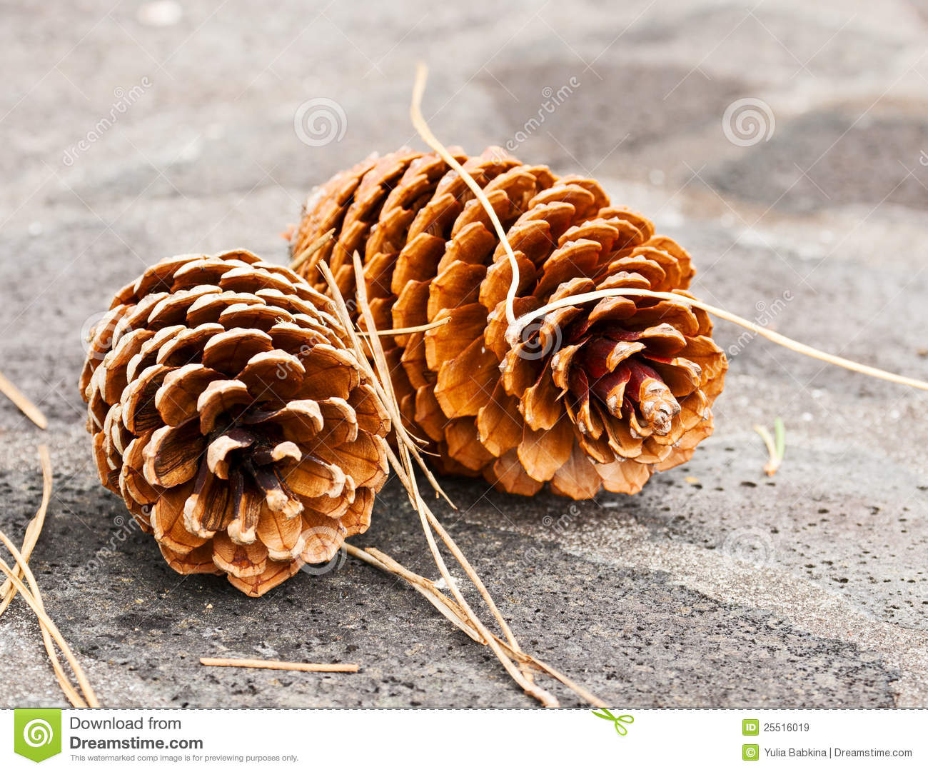 Two big pine cones royalty free stock images image 25516019 for Large pine cones