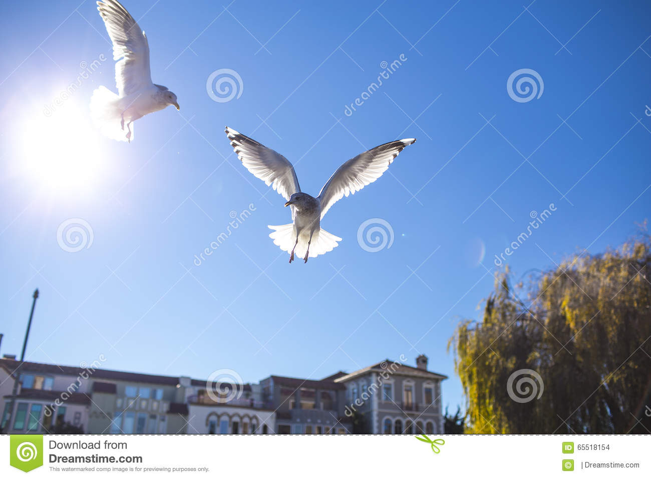 two bird flying on sky stock photo image of beaches 65518154