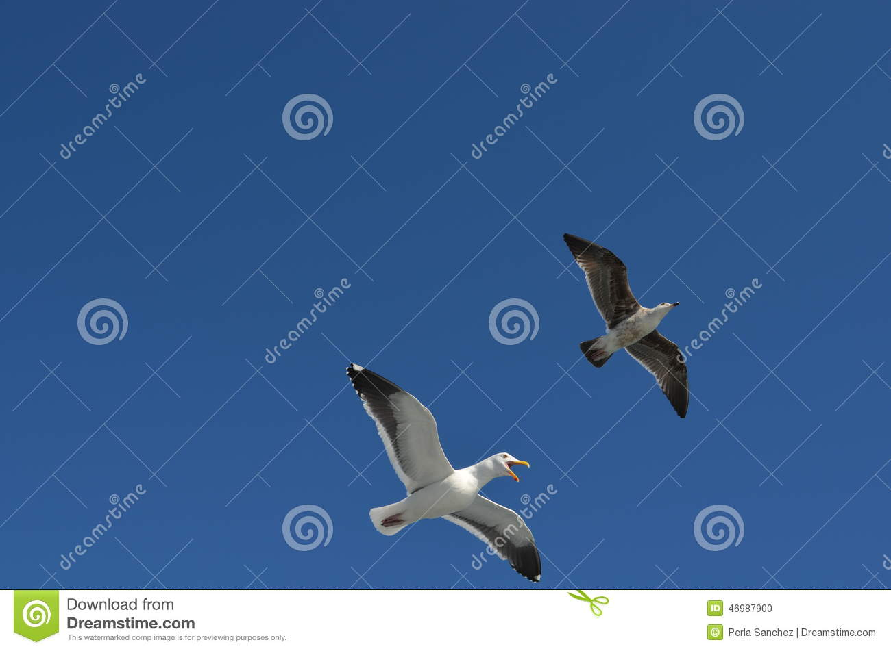 Flying Birds Free Stock Photos Download 3 416 Free Stock: Two Birds Flying Stock Photo. Image Of Nature, Animals