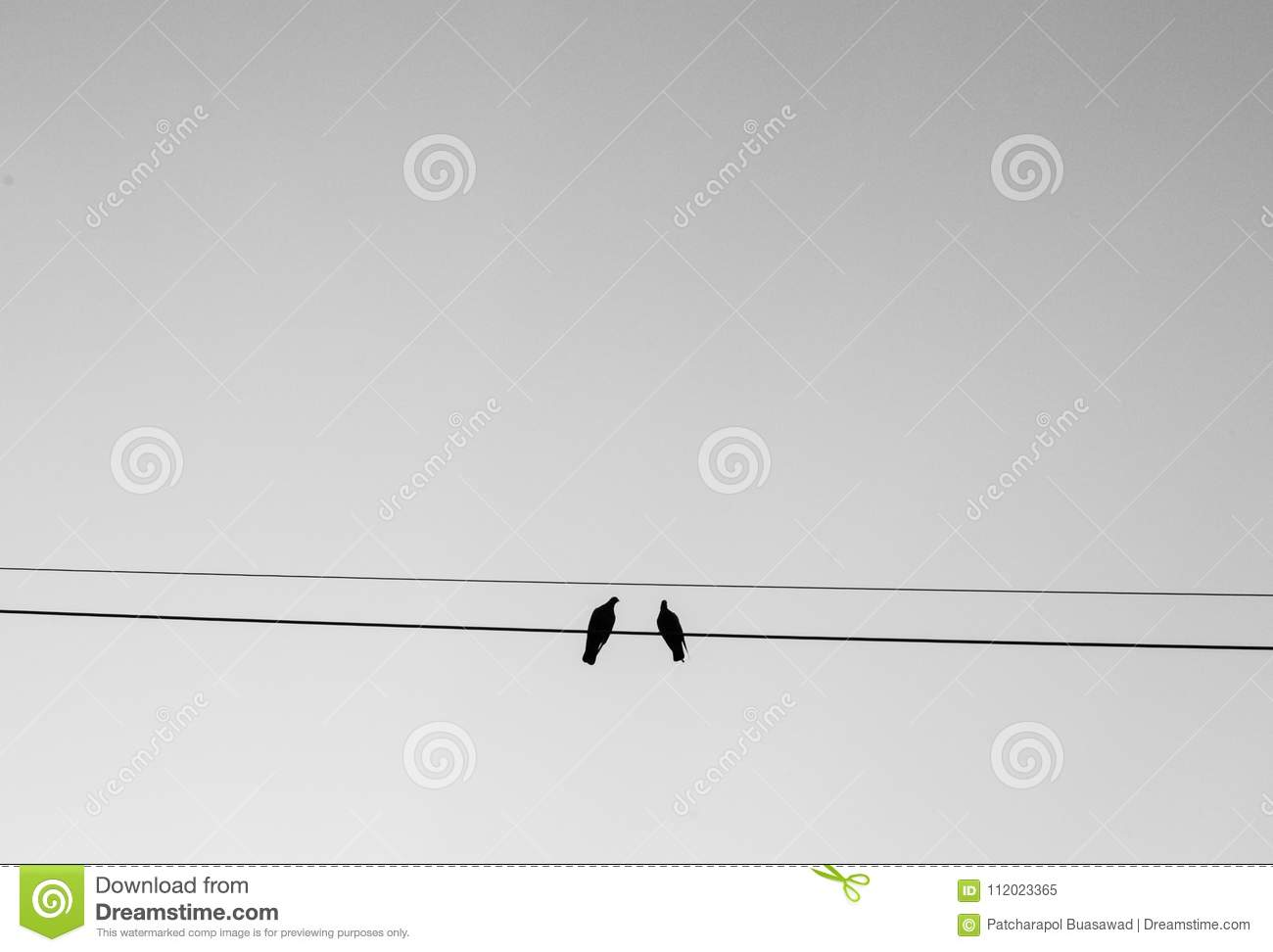 Two Birds Perching On Wire With Sky Background In Black And White ...
