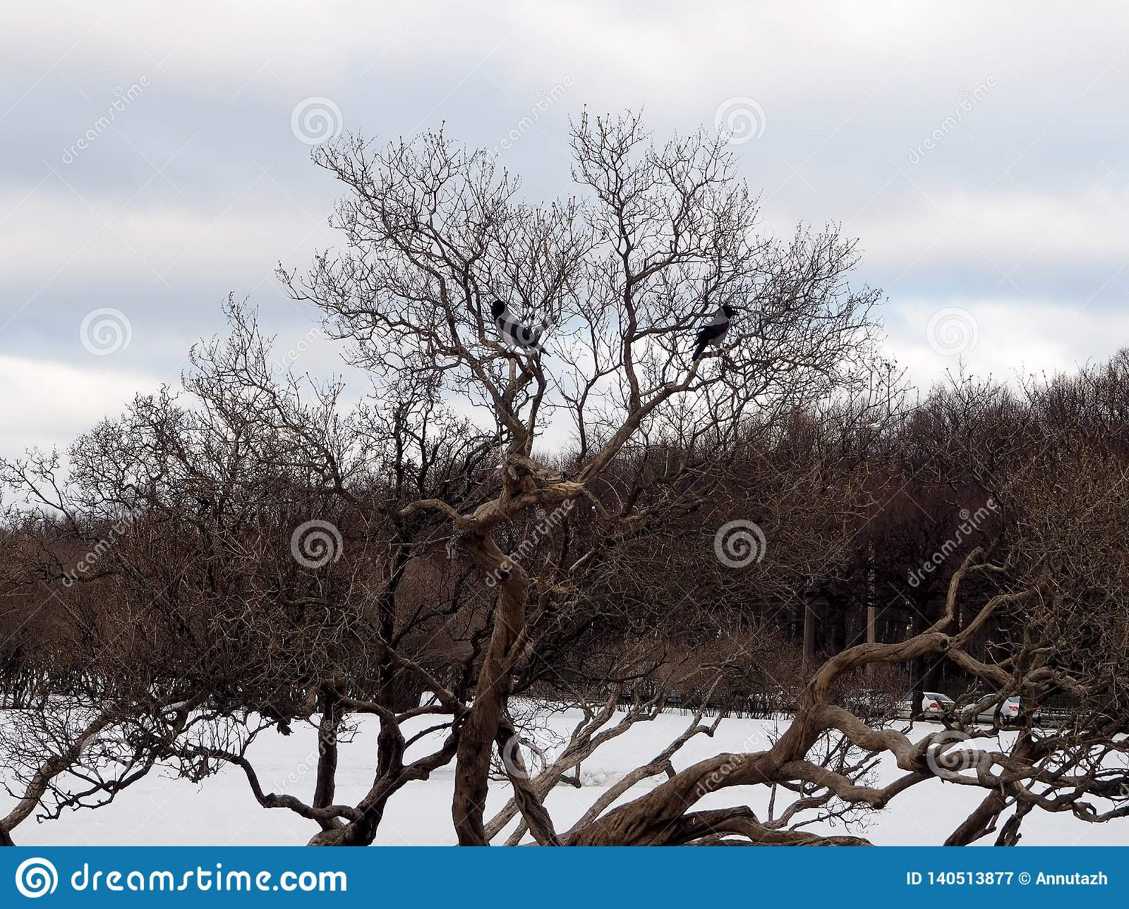 Birds Sitting On A Bare Branch
