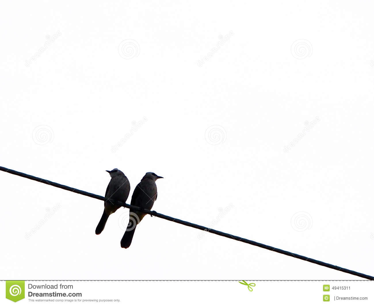 Two Birds Kissing On A Wire Center L14f1 L14f2 Datasheet Stock Photos Royalty Free Images Rh Dreamstime Com Meaning