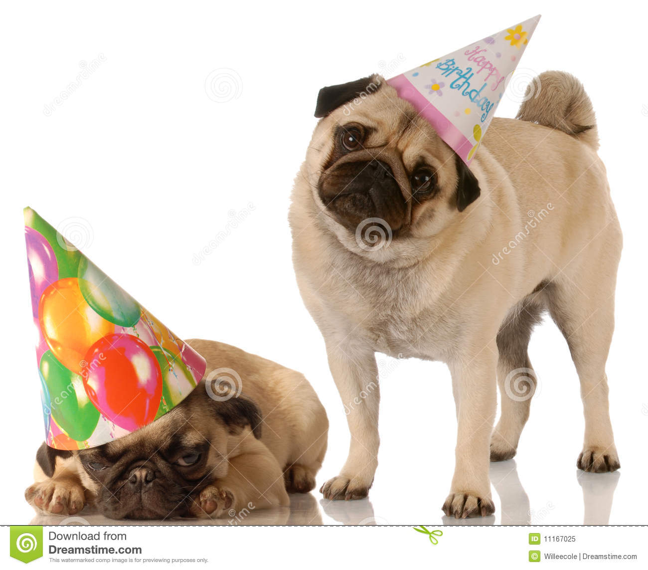 Two Birthday Dogs Stock Image Image Of Expression Funny