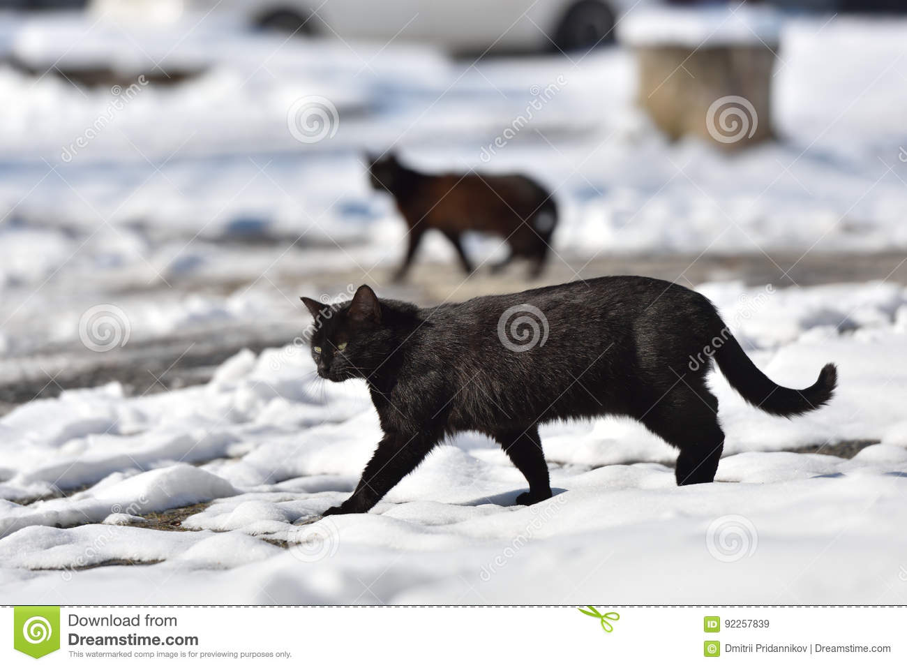 Two black cats are walking in the street on a winter day