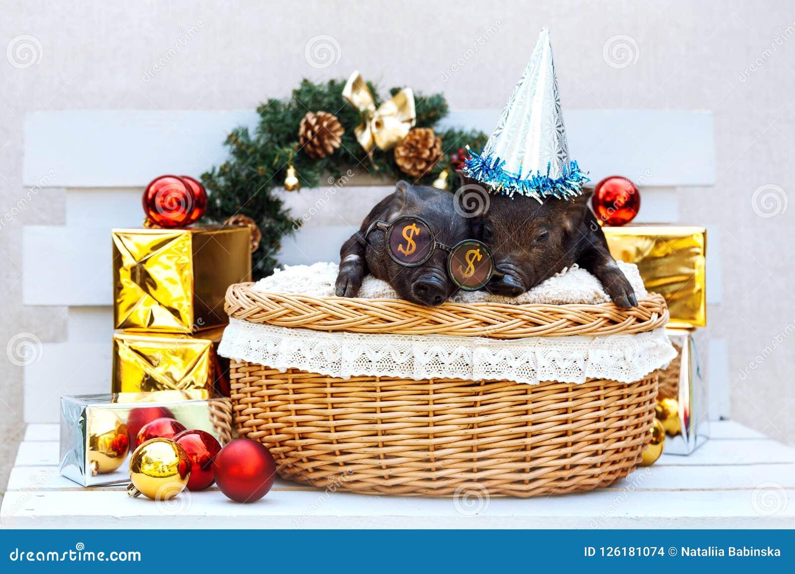 Pig Piglet Little Black Basket Wicker Cute Vietnamese ...