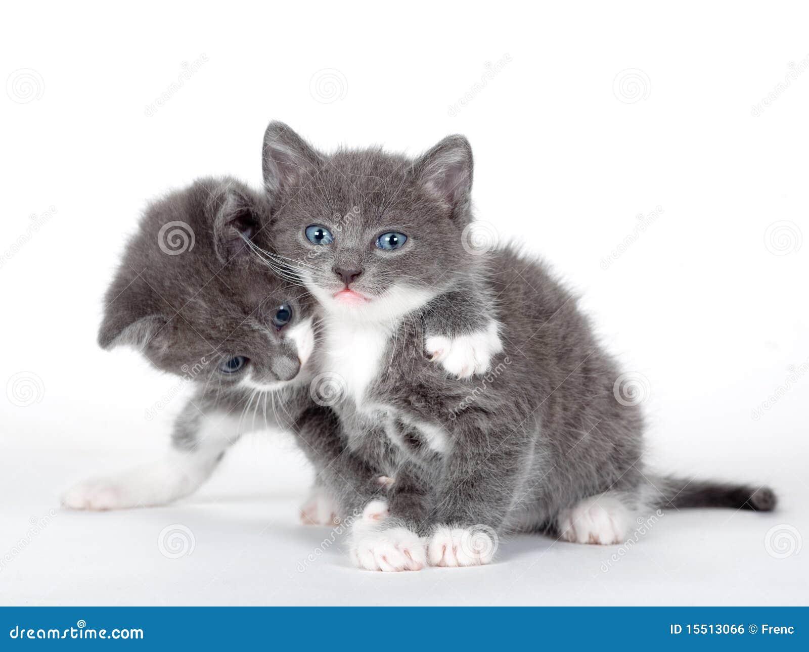 Открытка ты мой котенок