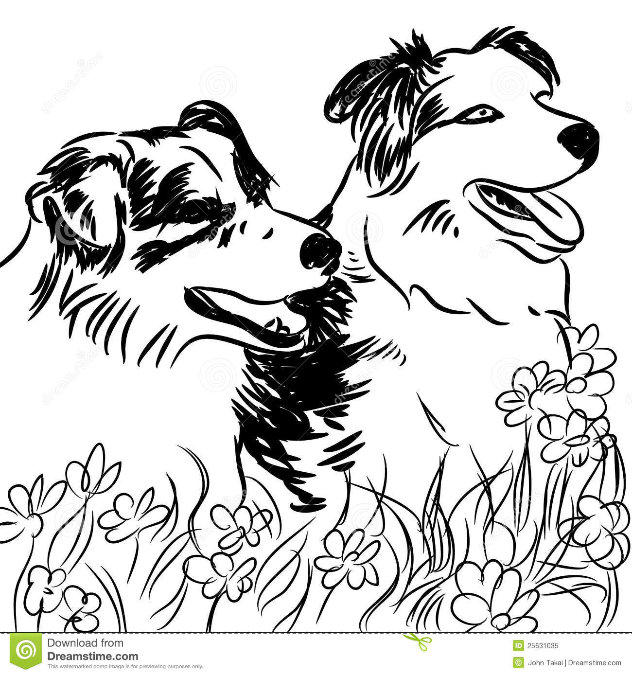 Royalty Free Stock Photo Download Two Border Collie Dogs