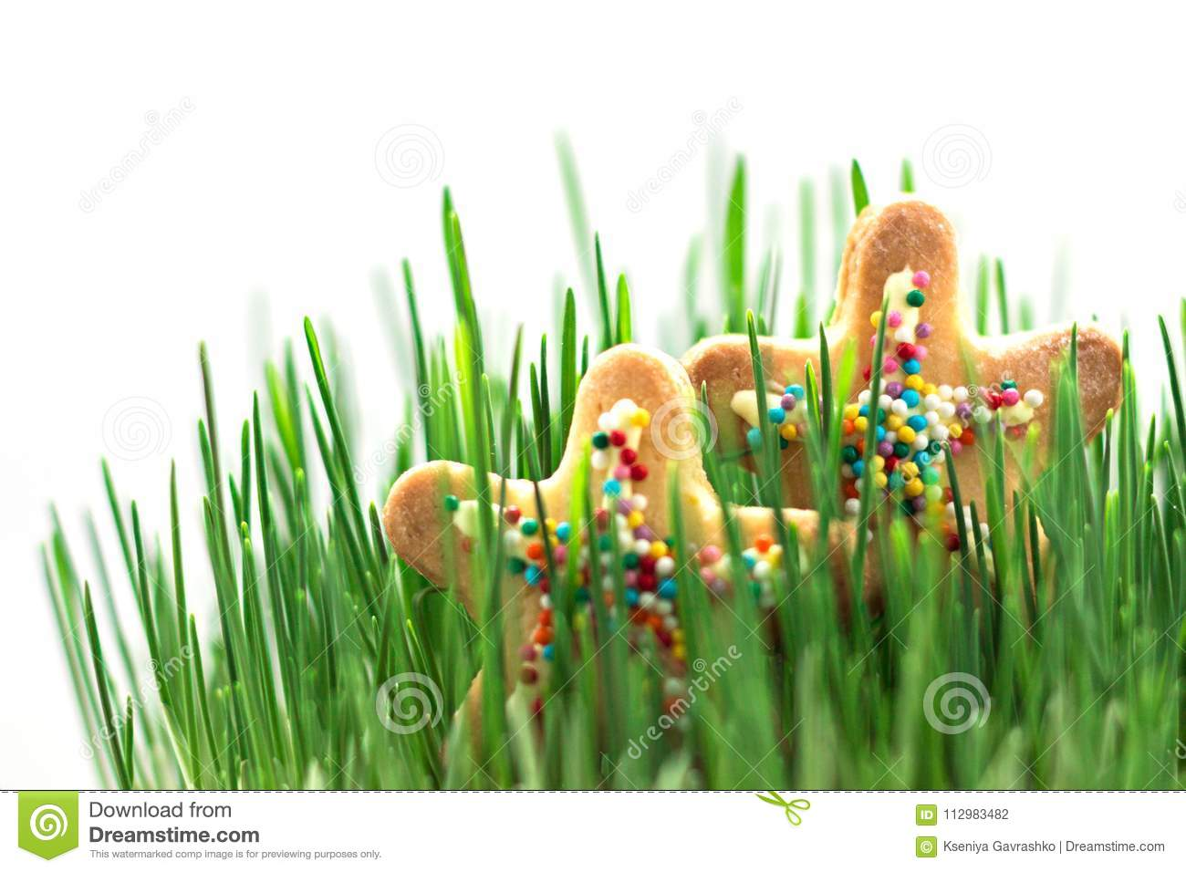 Bright Stars in Juicy Grass. Summer Concept. Holidays