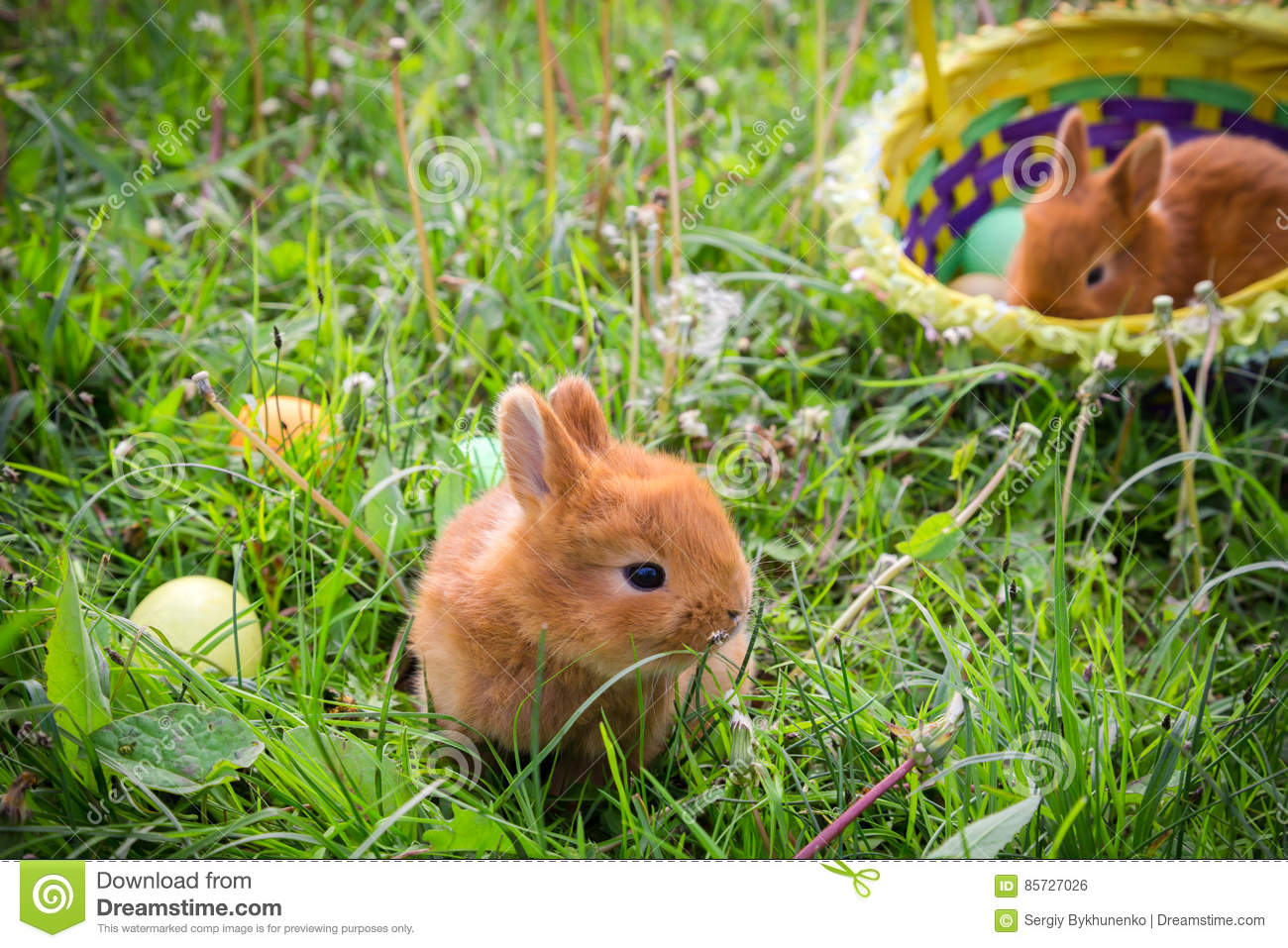 Two bunnies on green meadow with colorful easter eggs