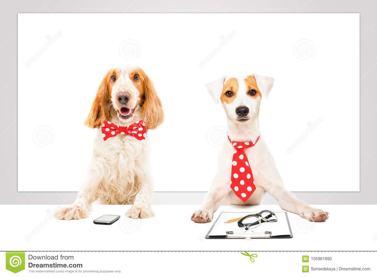 Two business dogs