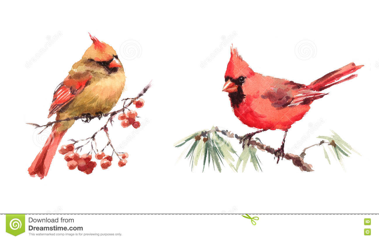 two cardinals birds male and female watercolor illustration hand