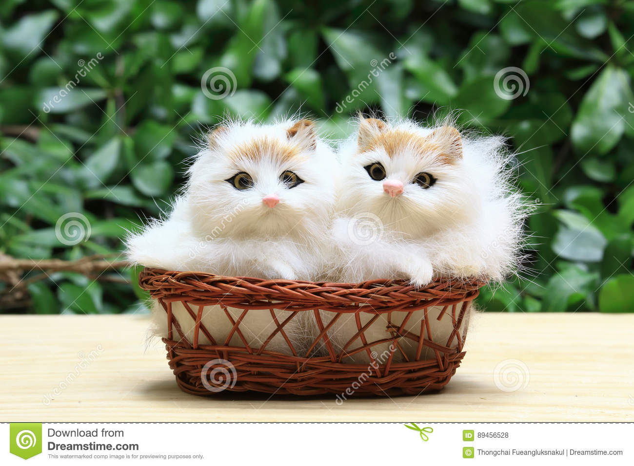 The two cat or kittens in the basket.