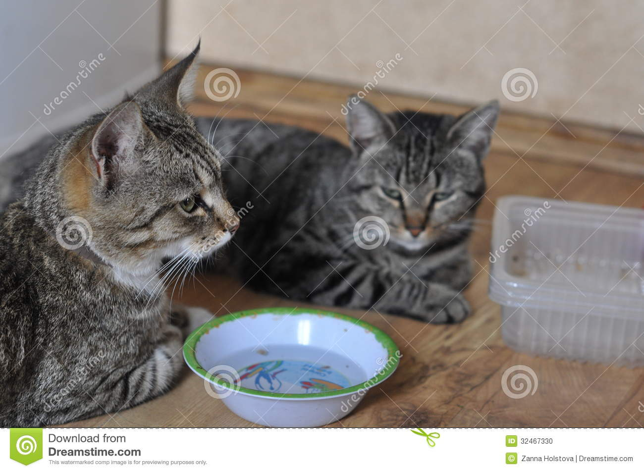 Two cat hungry