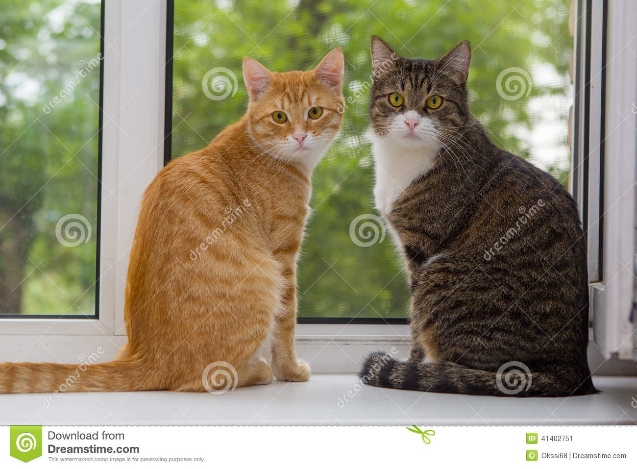Nice Two Cat Sitting On The Window Sill Stock Image