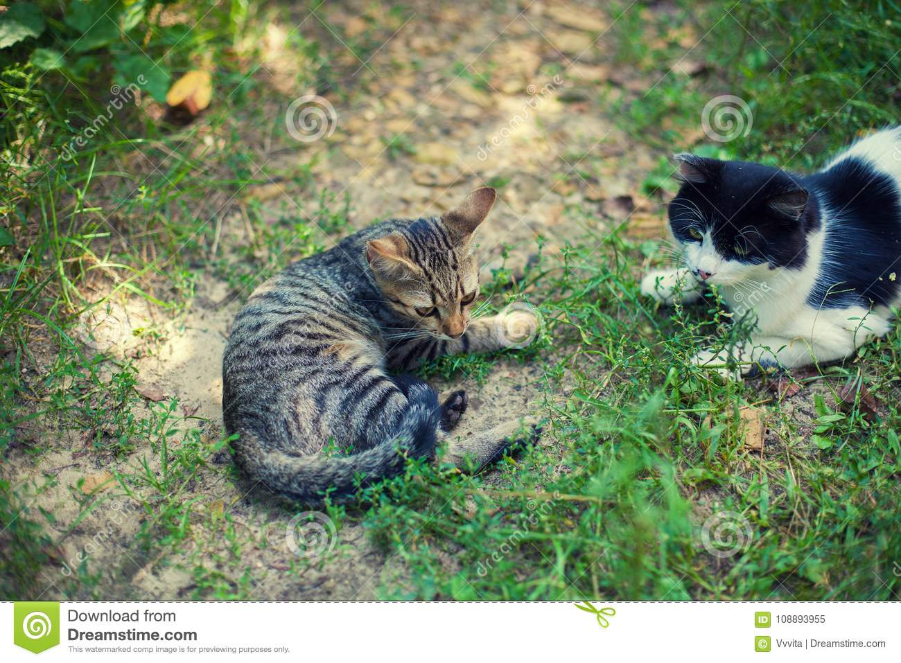 Black and white and striped cats lay on the grass in the yard