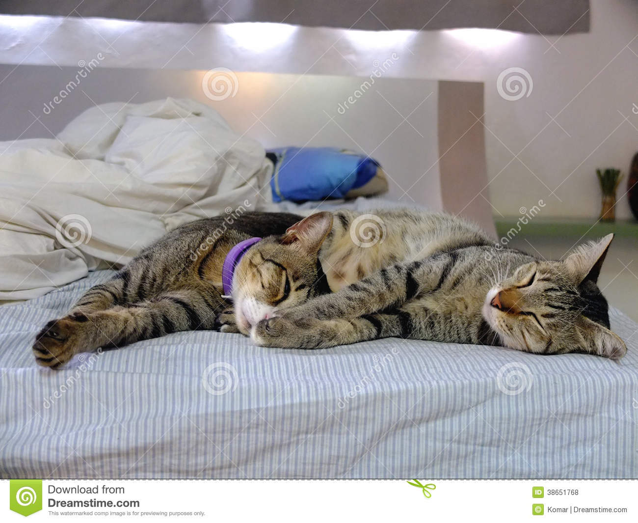 Two Cats Lying On Bed Stock Photo Image Of Home Resting
