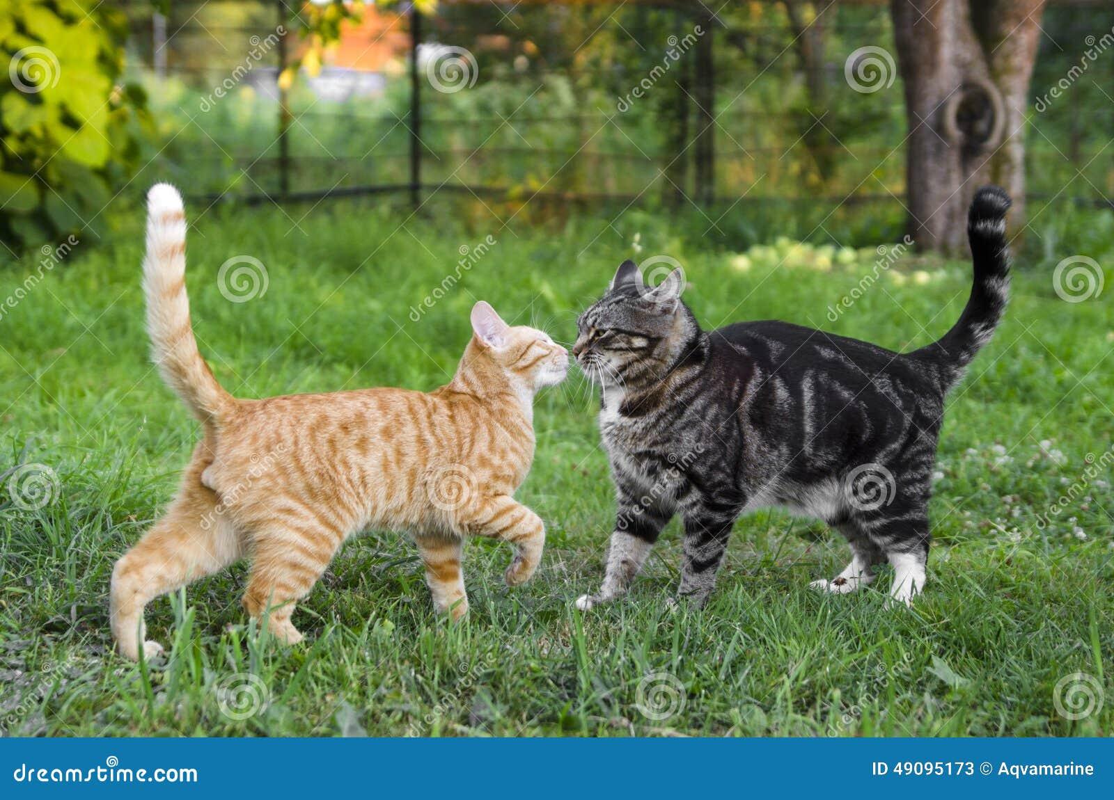 Katzenstreit