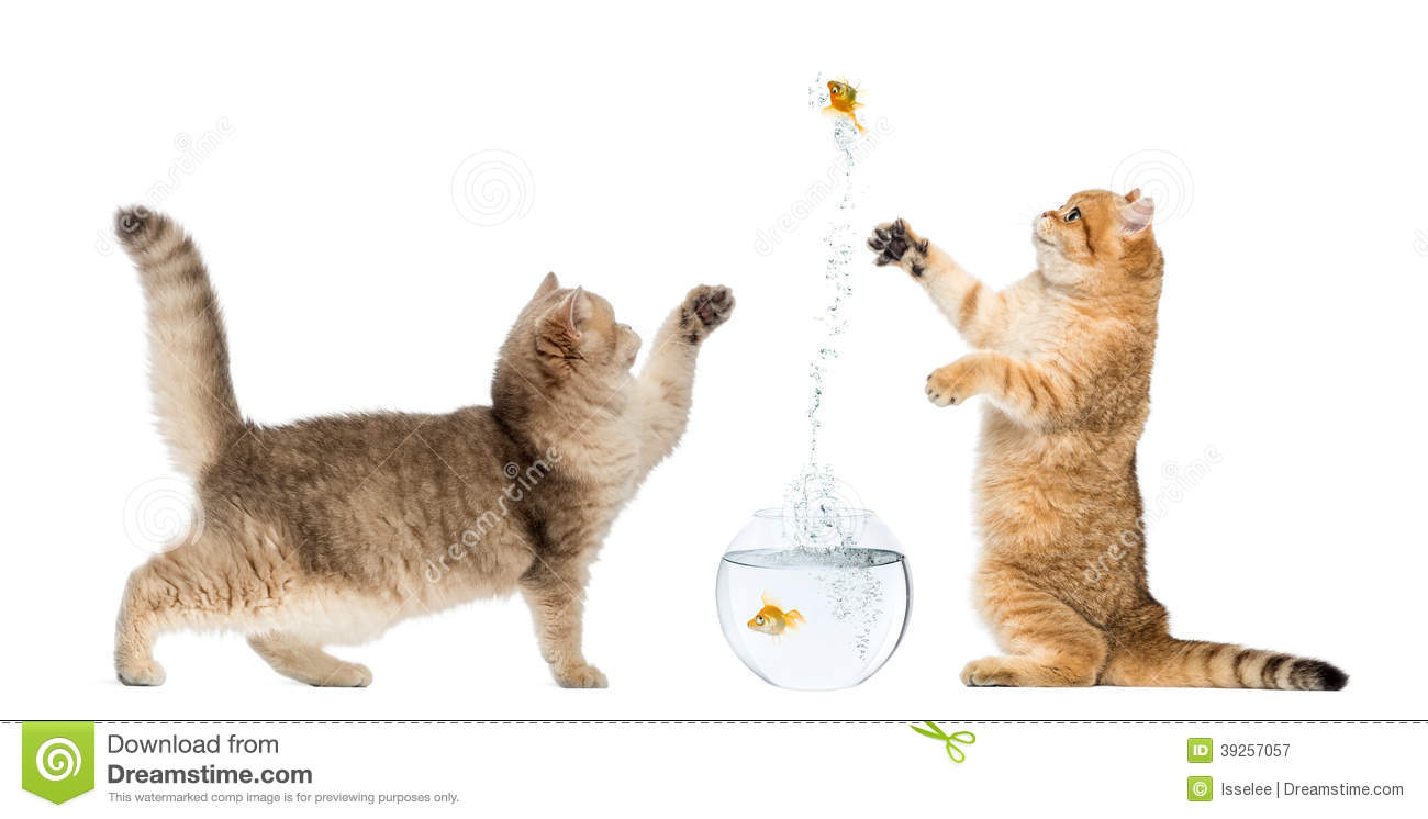 Free Swimming Goldfish Videos For Cats