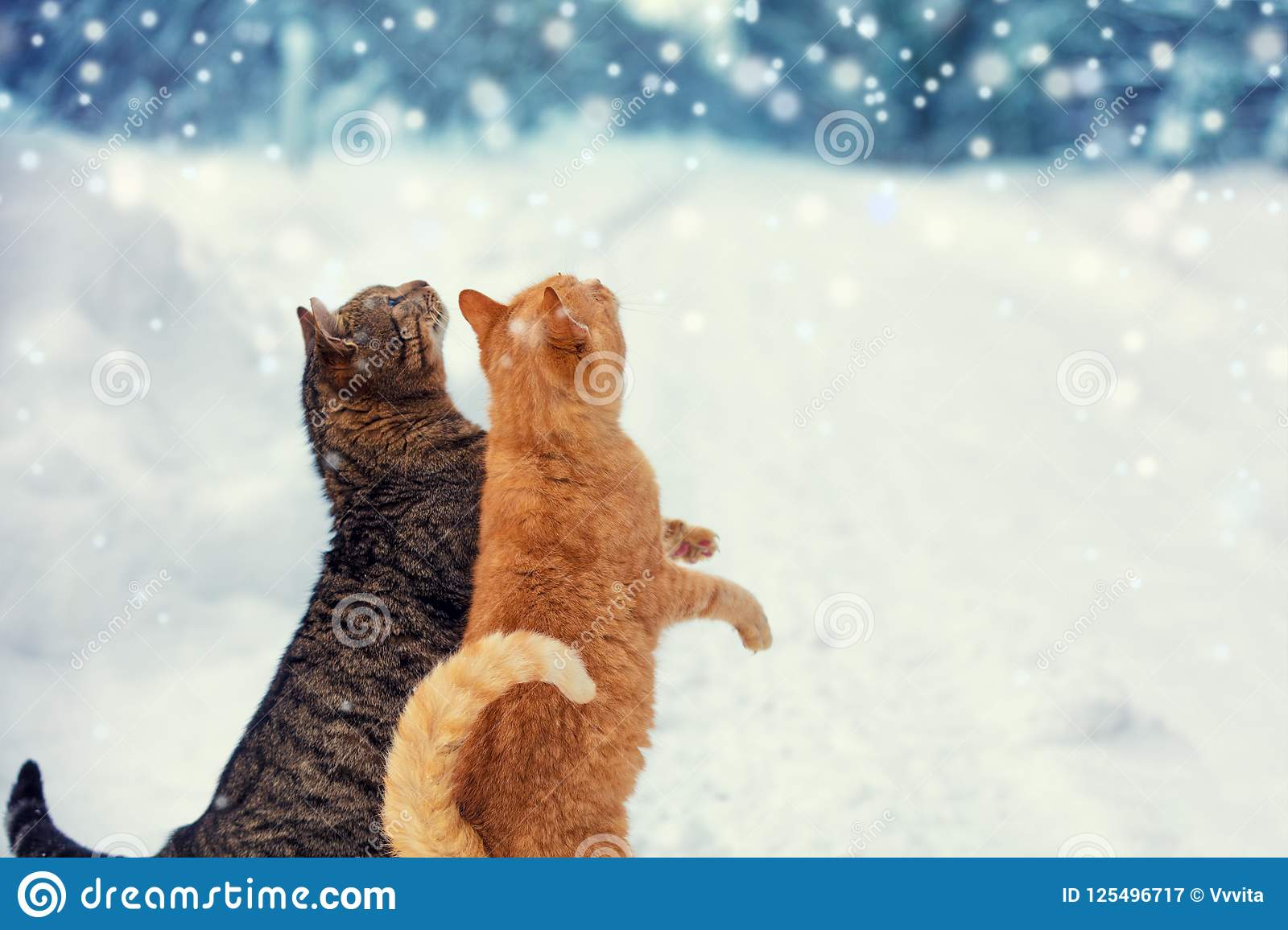 Two cats walk on snow during a snowfall
