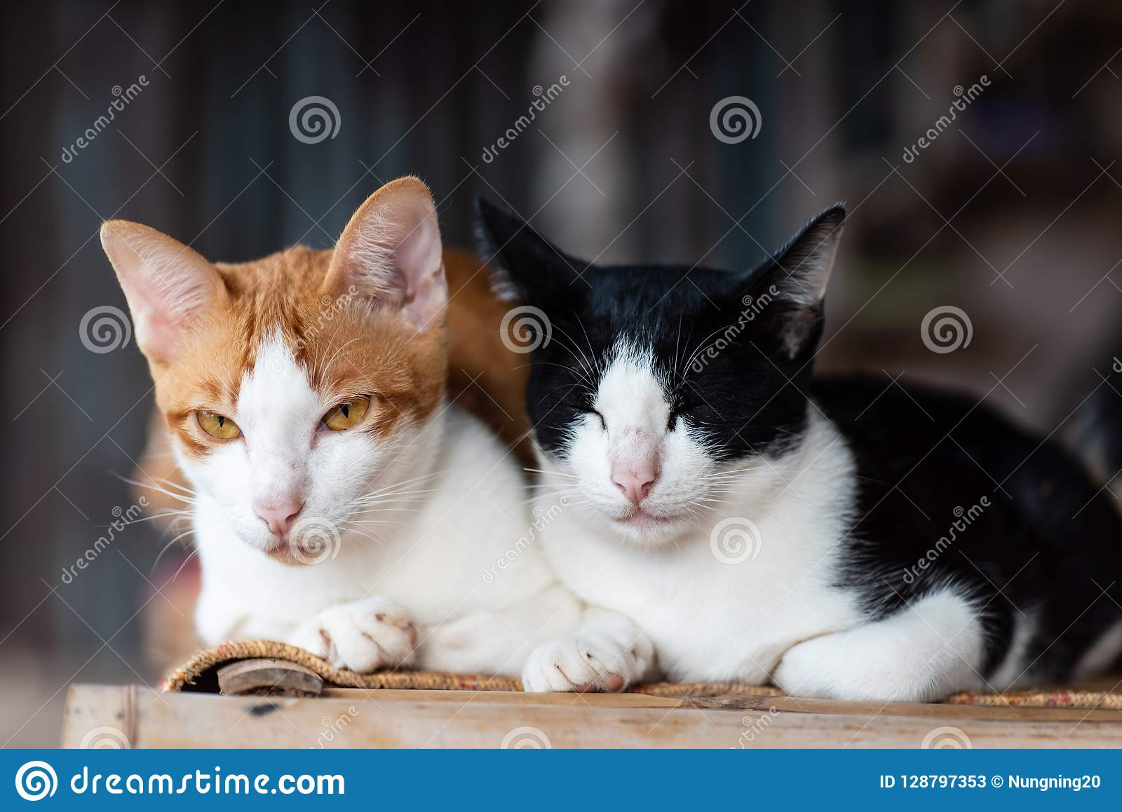 Two Cats Are Sitting Together On The Mat Stock Image , Image