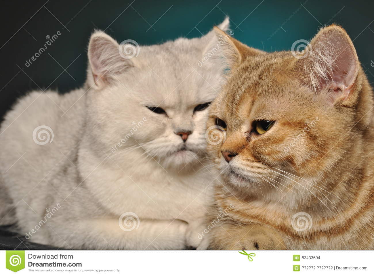 Two cats stock photo. Image of comfort, couple, sitting