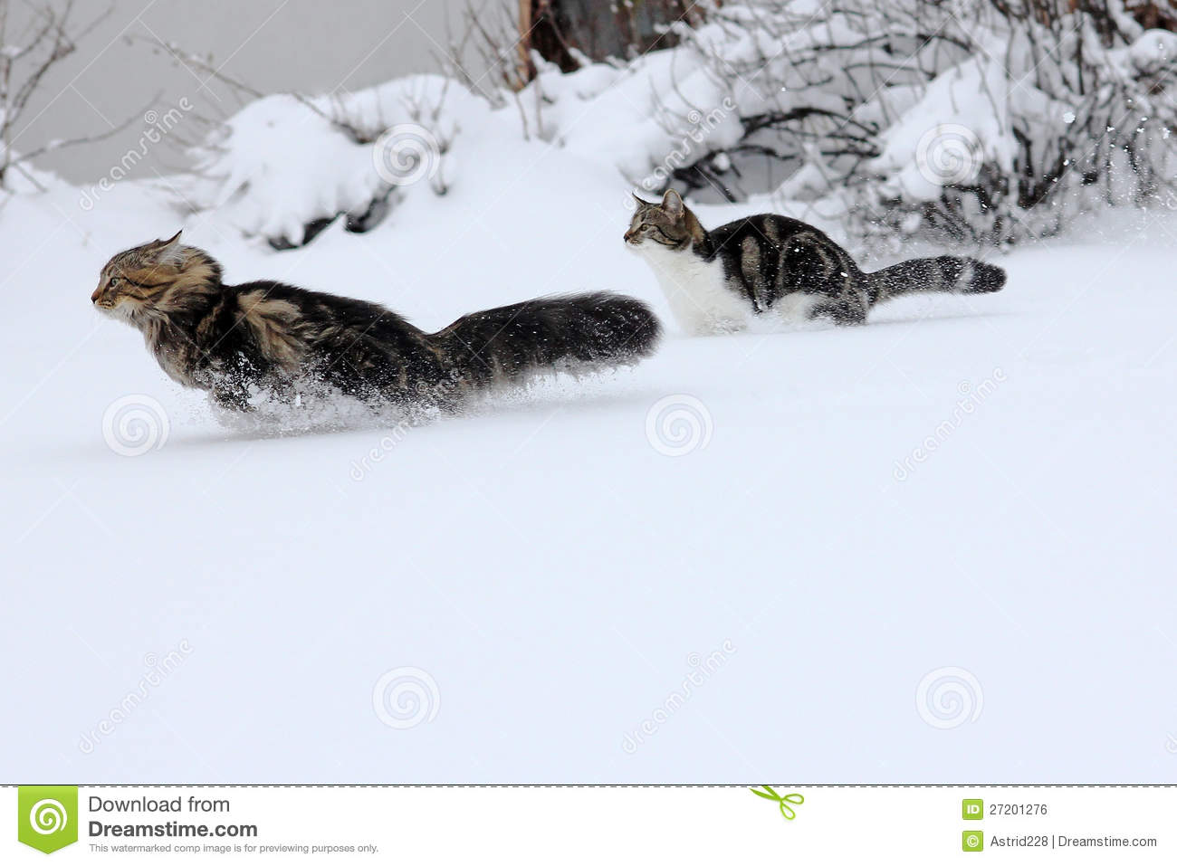 Funny Snow Photos With Cats
