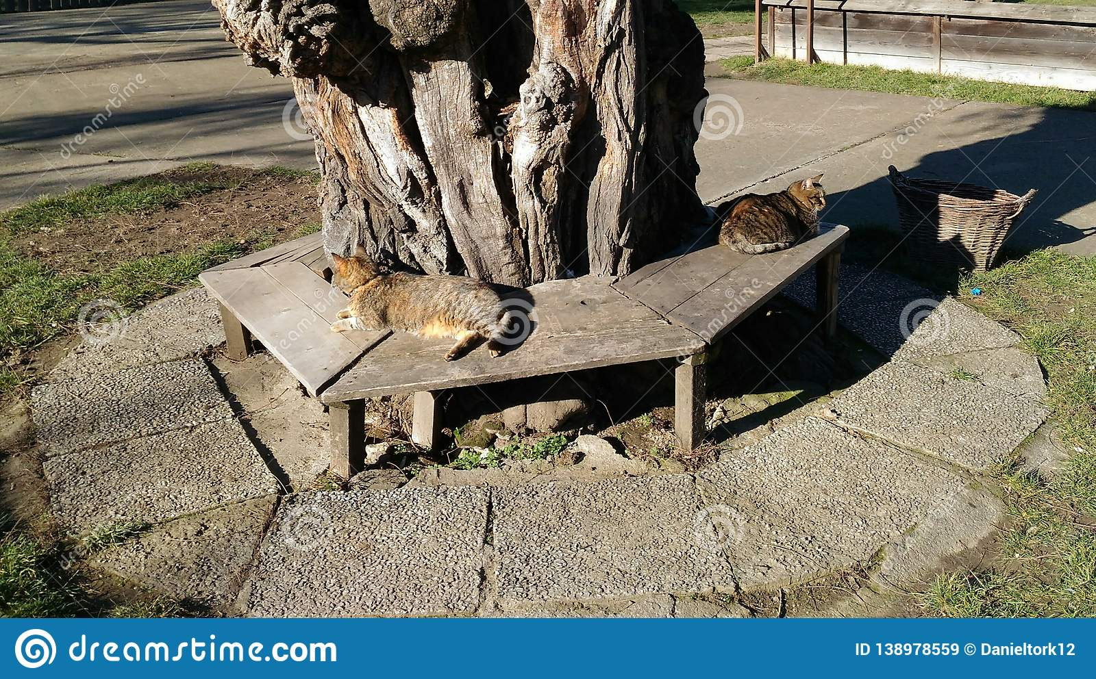 Sensational Two Cats Under The Shadow Of A Tree Stock Image Image Of Uwap Interior Chair Design Uwaporg