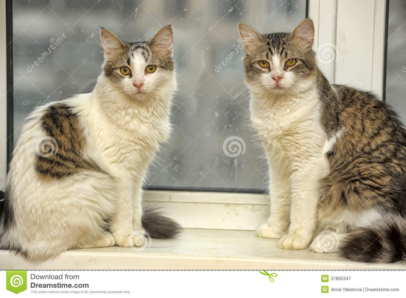 Two cats on the windowsill