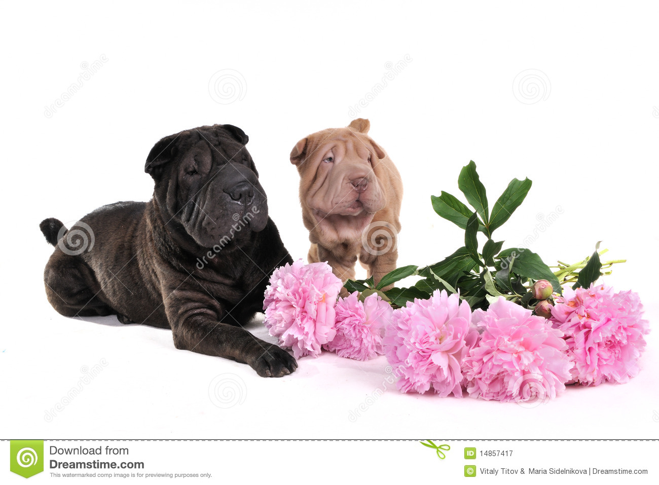 Two Char-Pei with Flowers