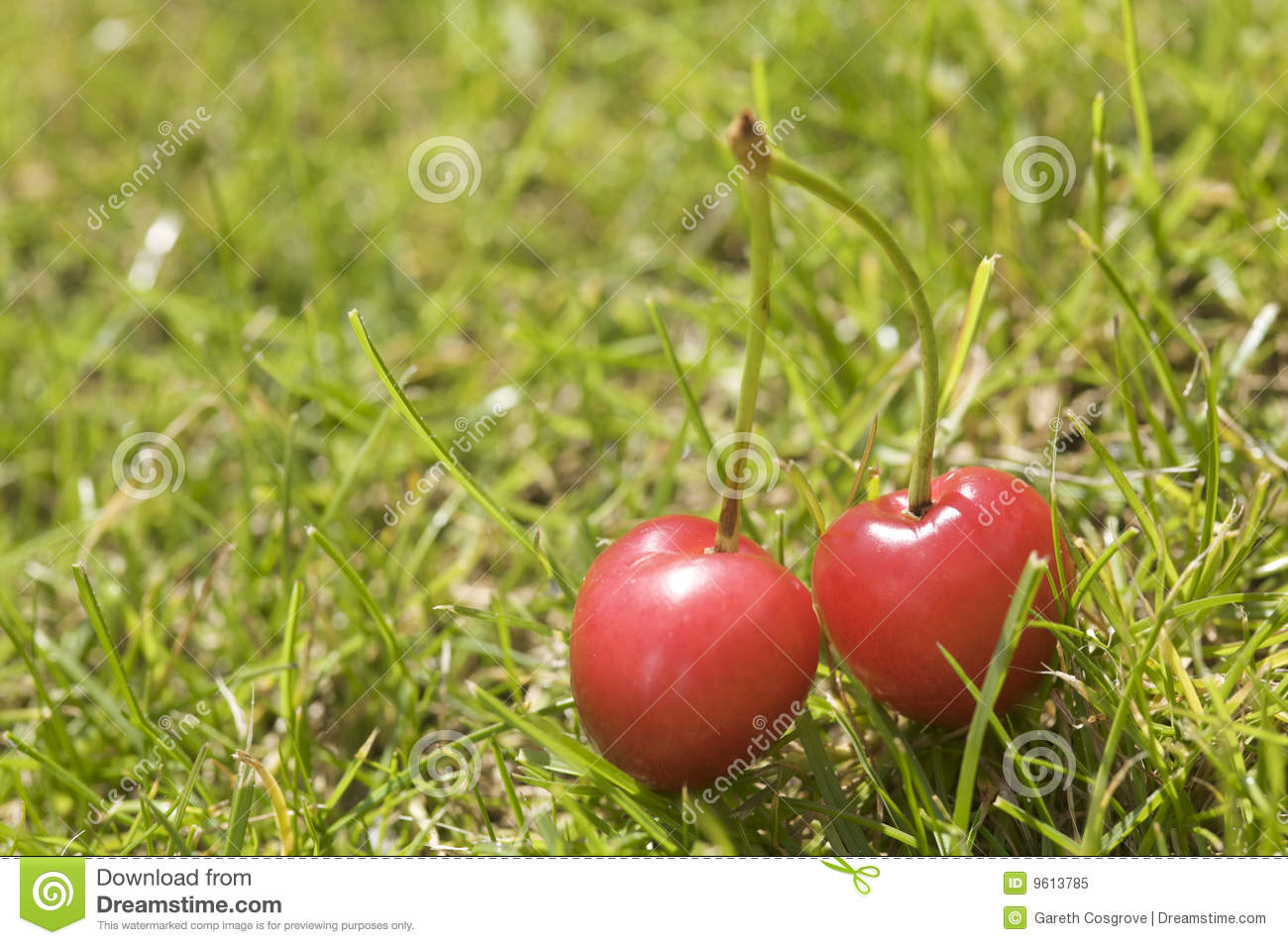 Two cherries in grass