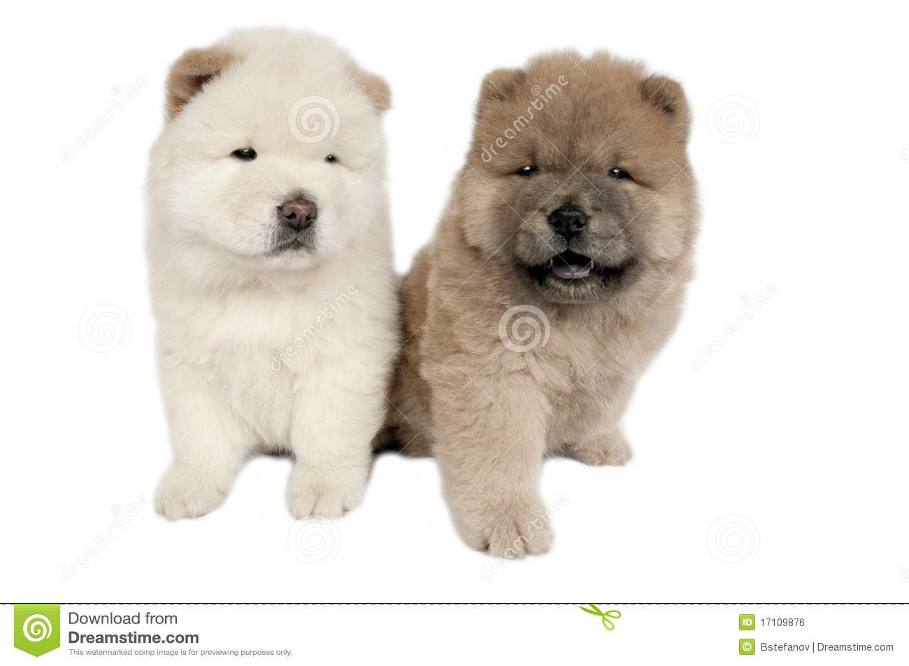 Two Chow-chow Puppies . Royalty Free Stock Image - Image: 17109876