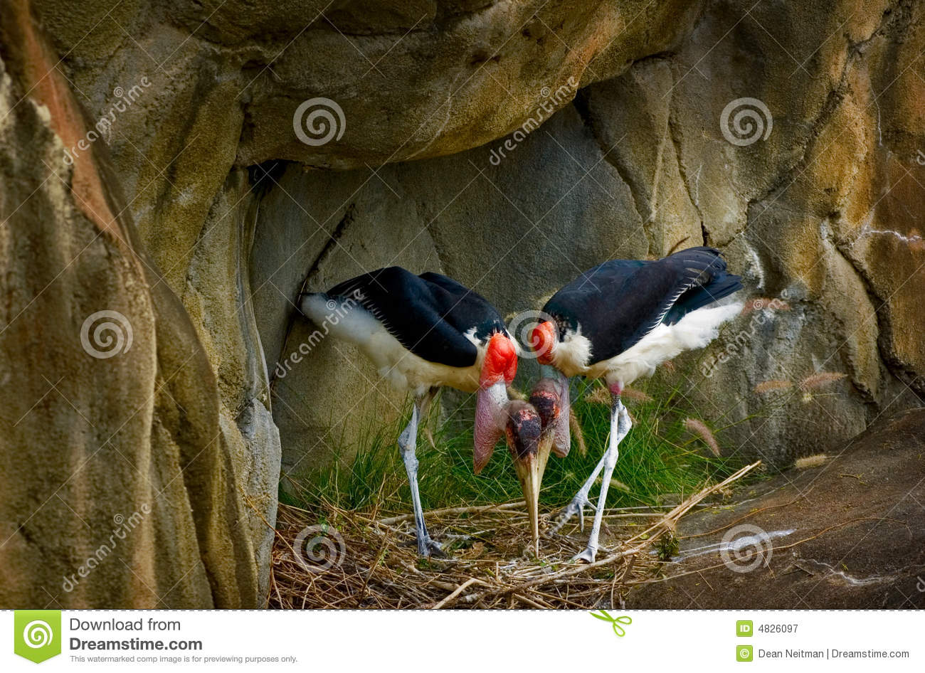 Two Colorful Birds Nesting