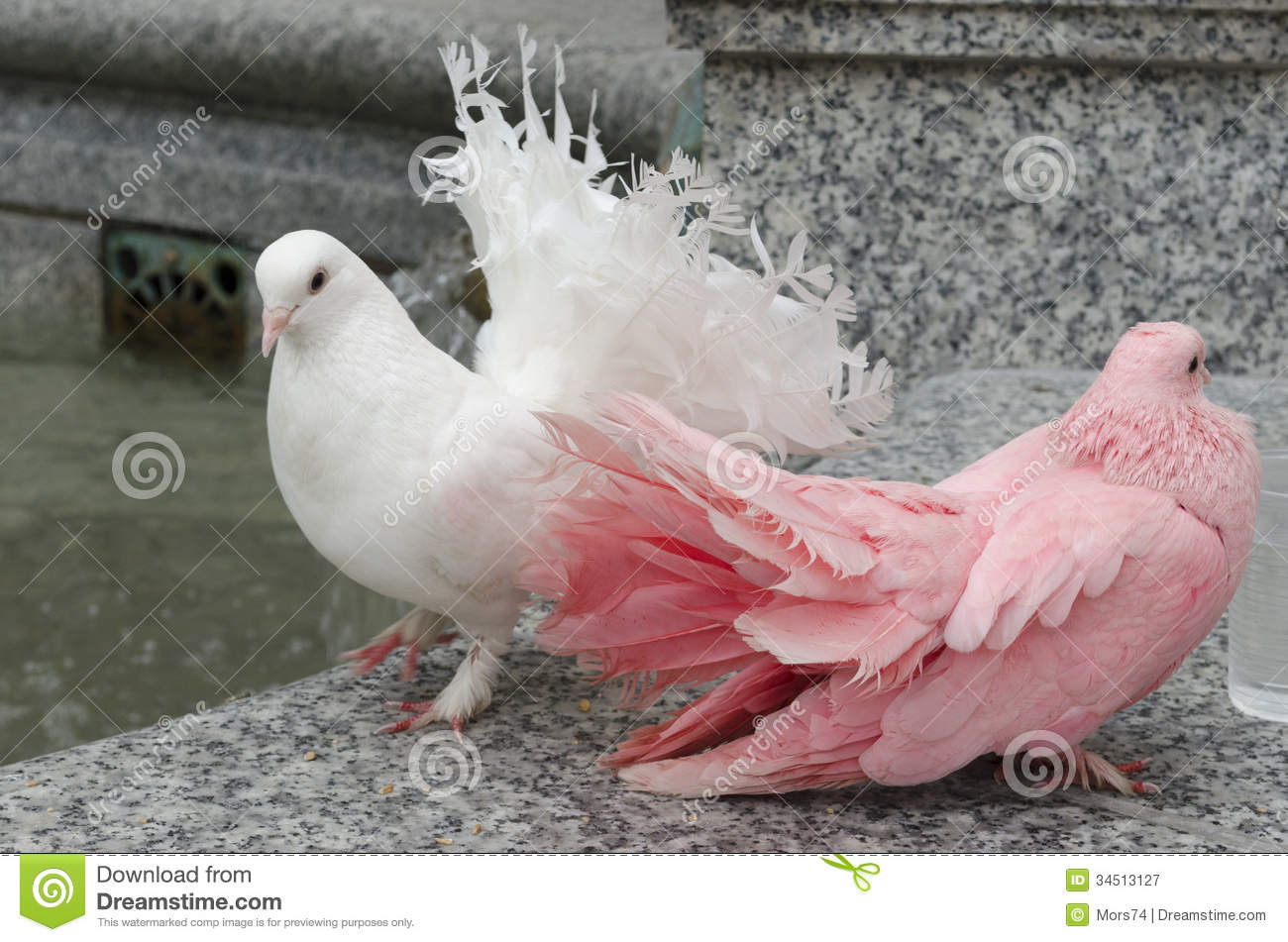 Two Colorful Doves On A Parapet Stock Image Image Of Dove Water