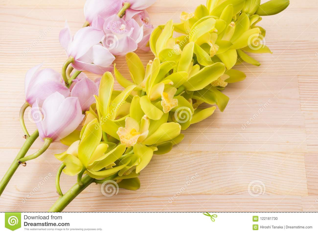 Two colors of orchid flowers