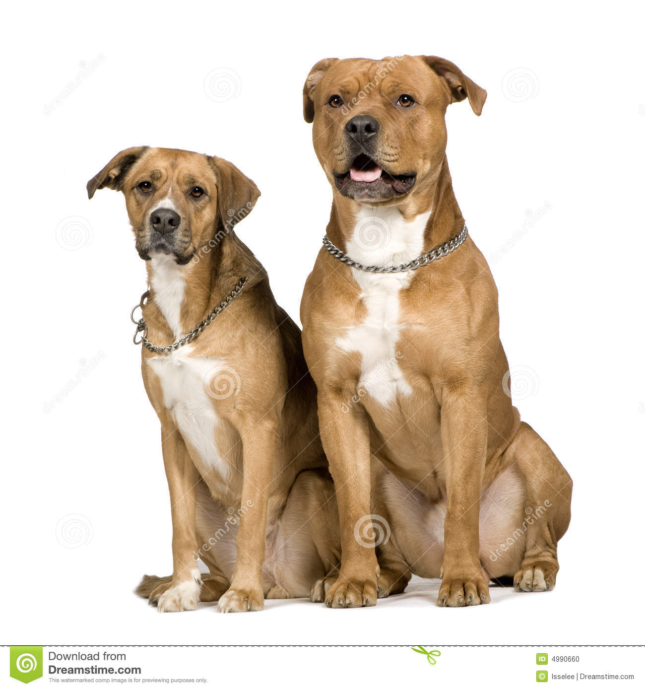 All Mixed Dog Breeds With Pictures