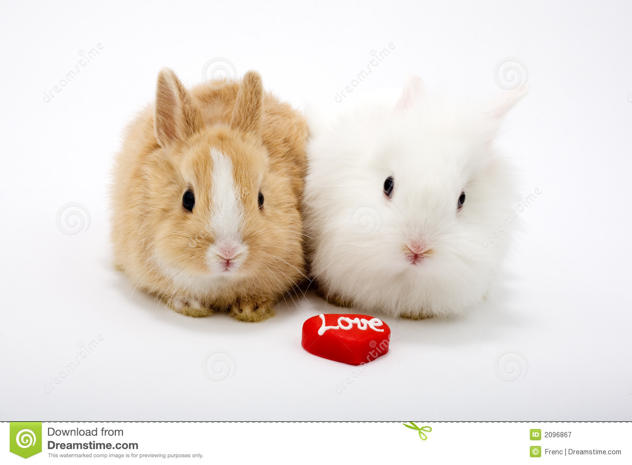 Two Cute Baby Rabbits Royalty Free Stock Photography - Image: 2096867