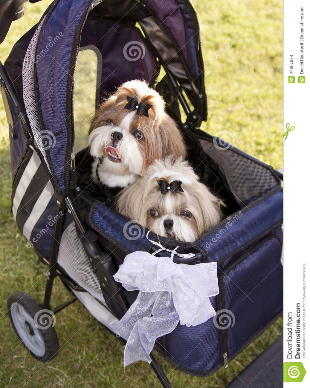 Best Baby Friendly Dogs