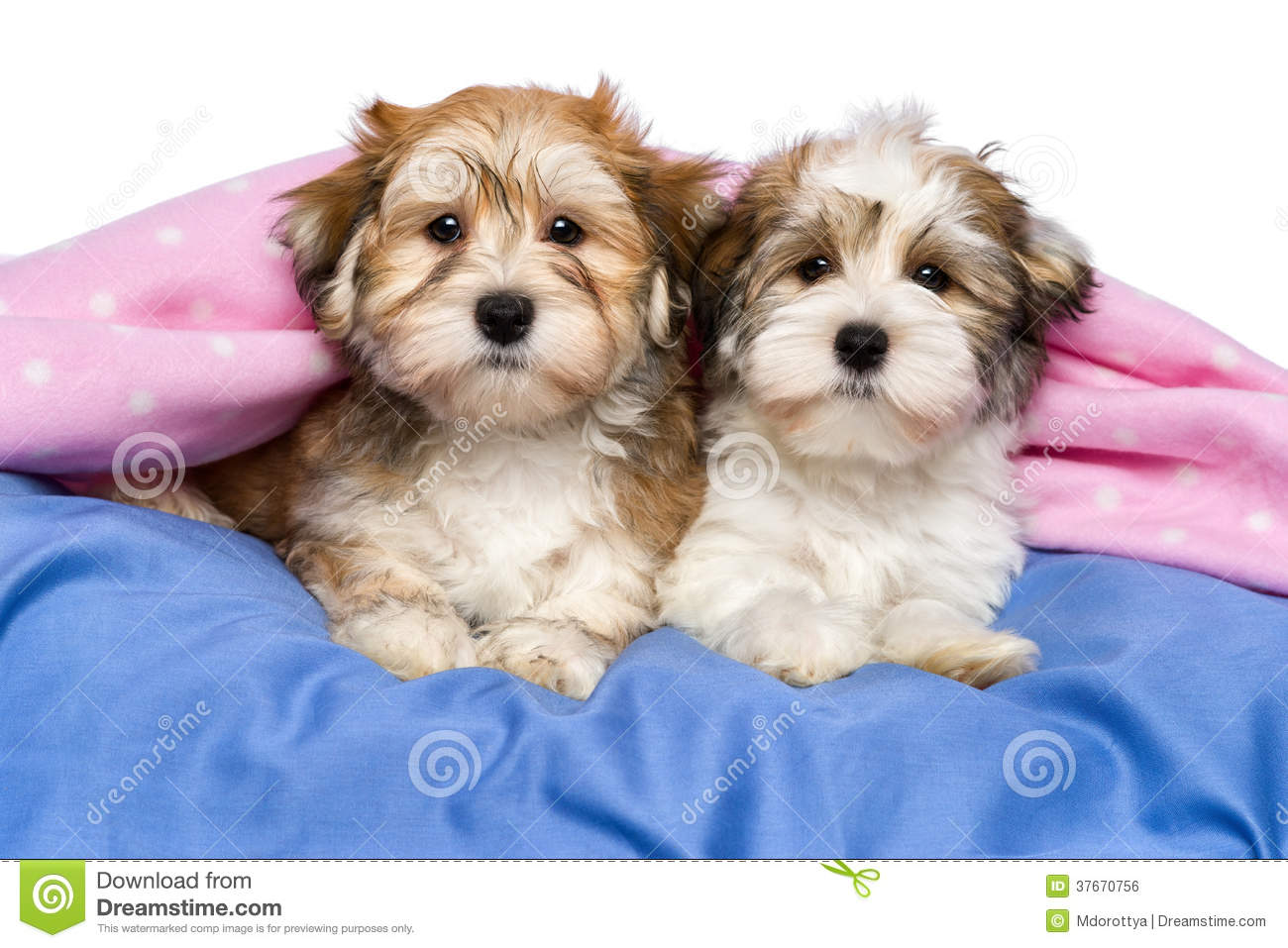 Baby Puppies On A Bed