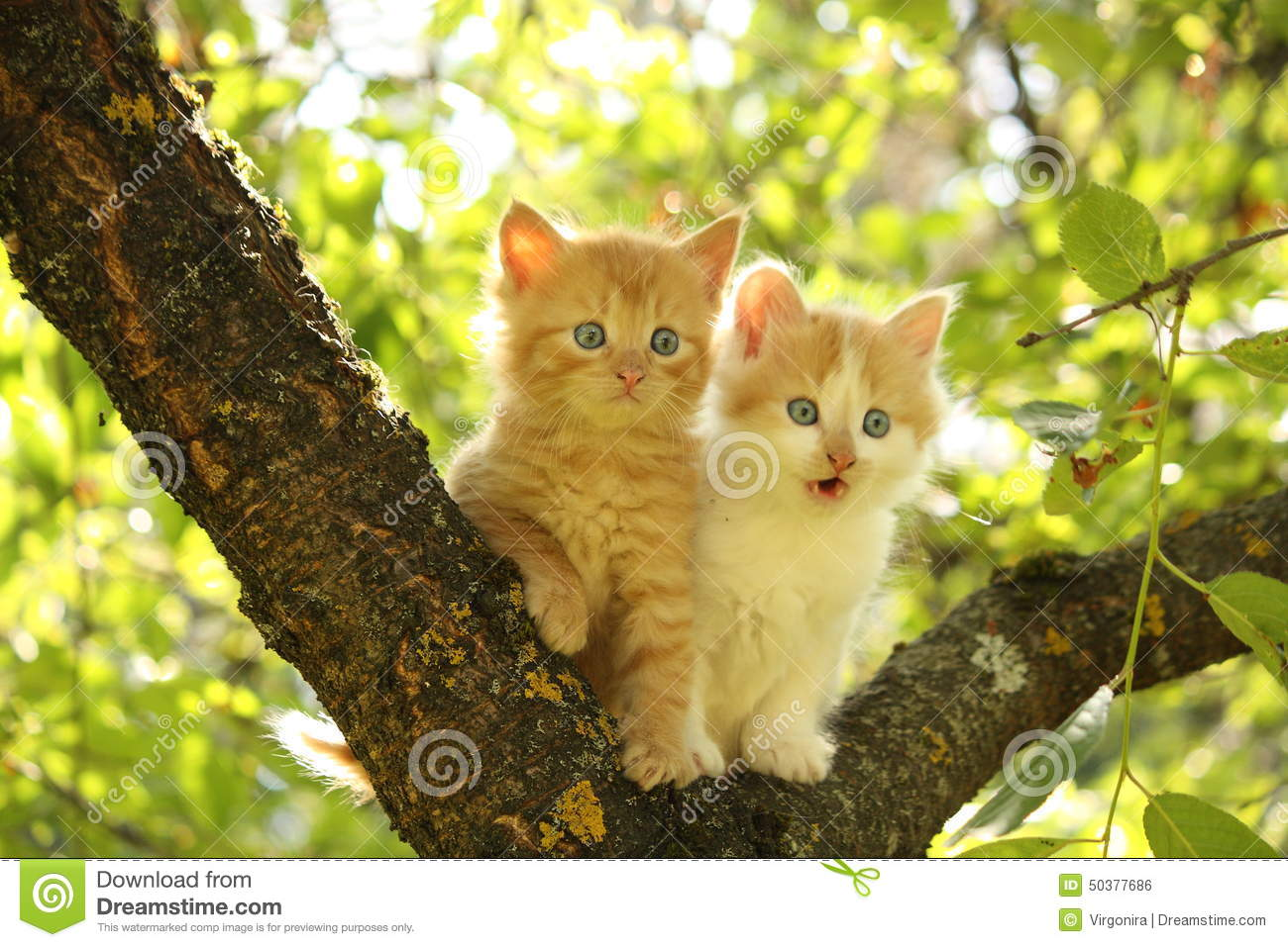 Two Cute Kittens Sitting On The Tree Branch Stock Photo ...