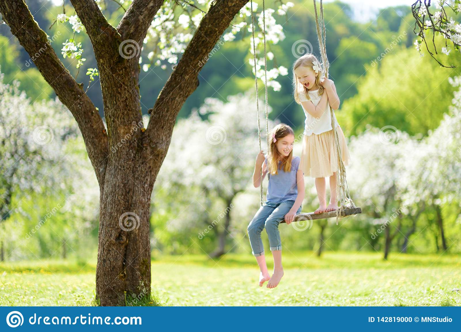 Two cute sisters having fun on a swing in blossoming old apple tree garden outdoors on sunny spring day