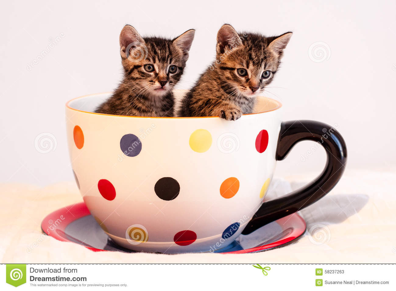Two Cute Tabby Kittens In Giant Polka Dotted Mug Or Cup