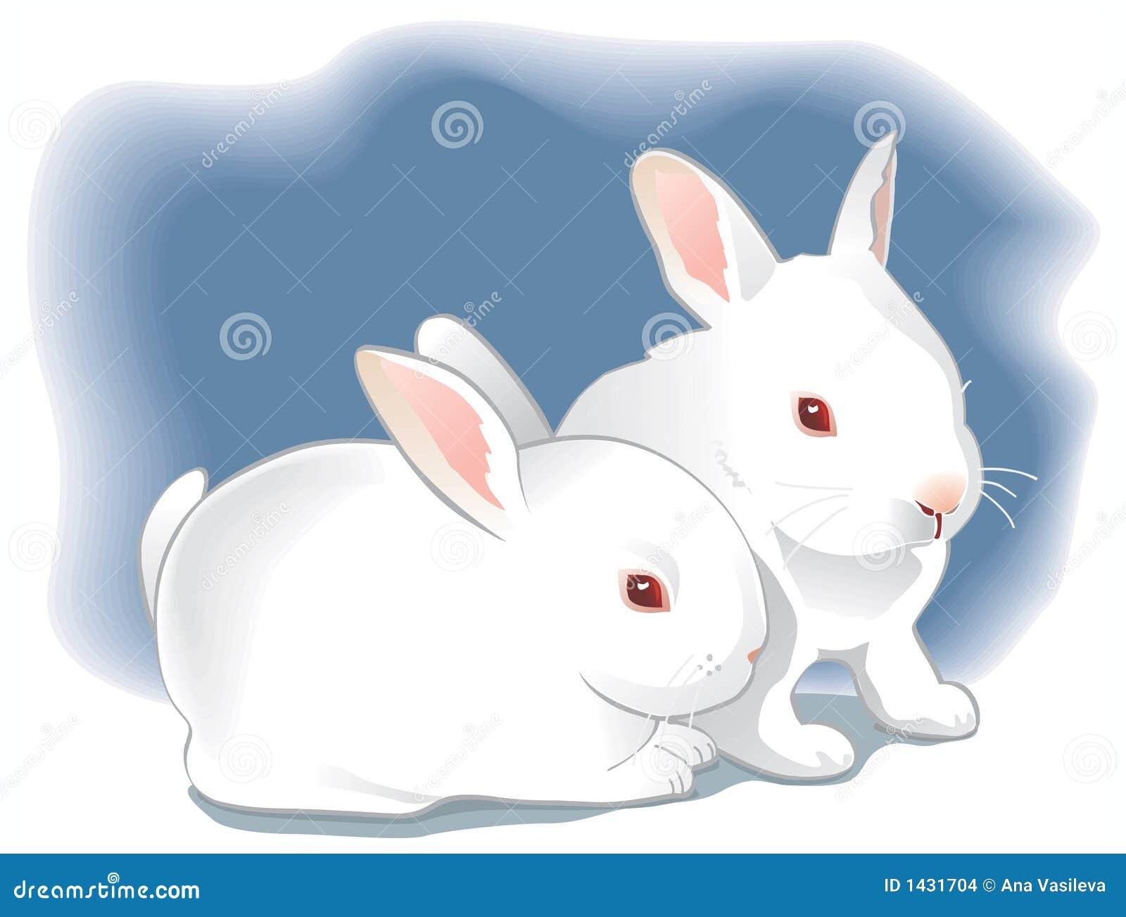 Two cute white baby ra...