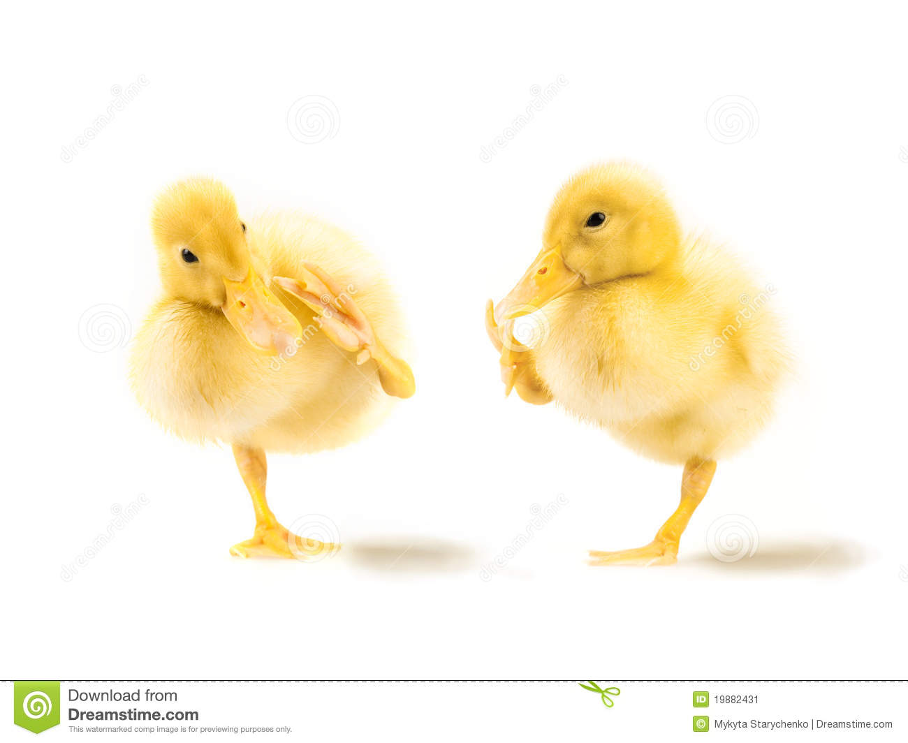 Yellow Duckling