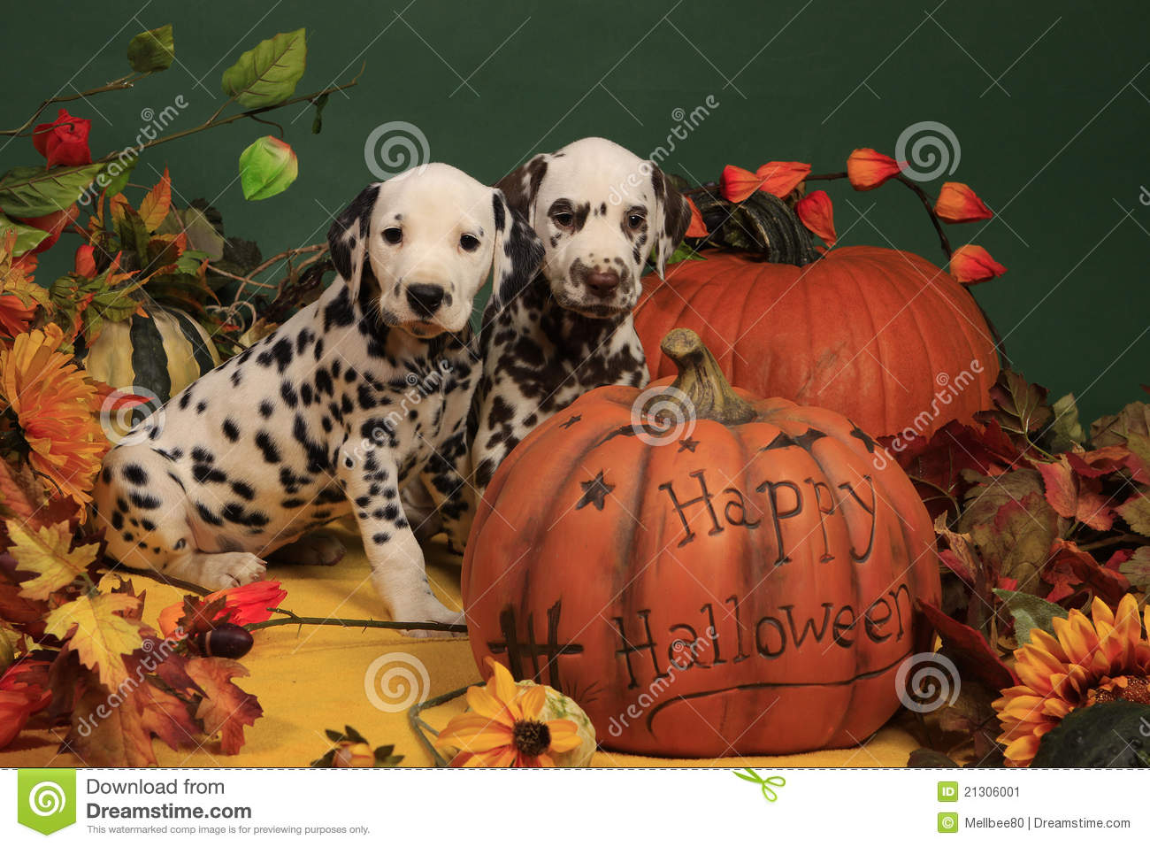 Two Dalmatian Puppies Next To Halloween Pumpkin Stock Image Image