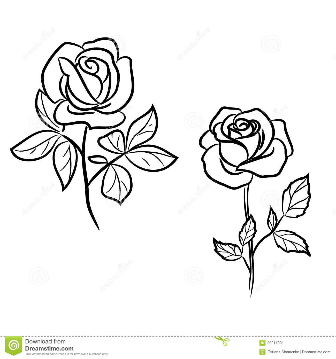 Two Roses On White Stock Image Image 29911001