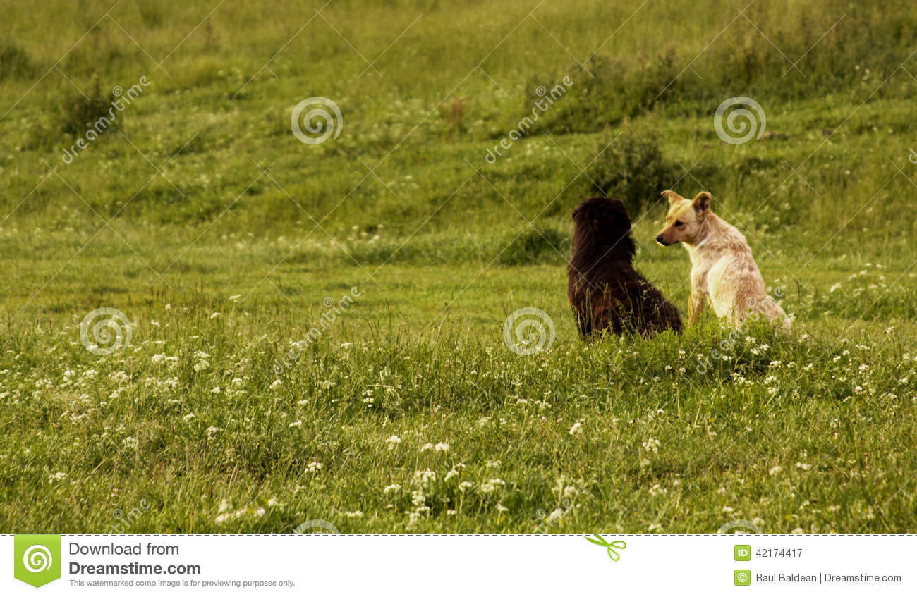 Two dogs in a green field