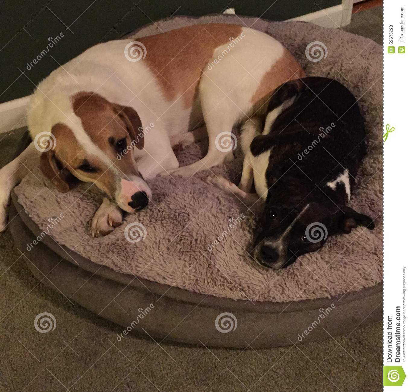 Dog Bed For Two Medium Sized Dogs
