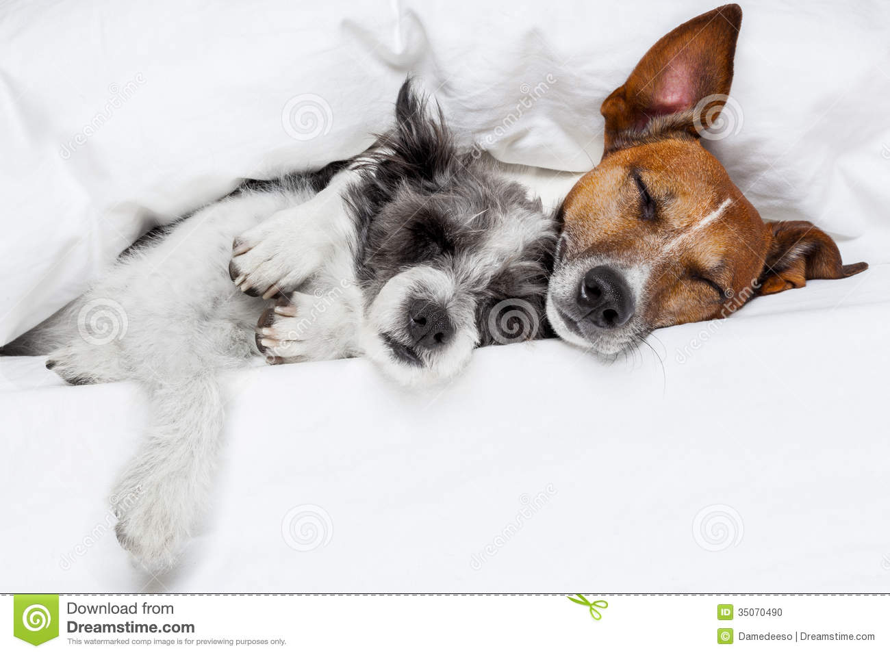 Two Dogs In Love Stock Photo - Image: 35070490