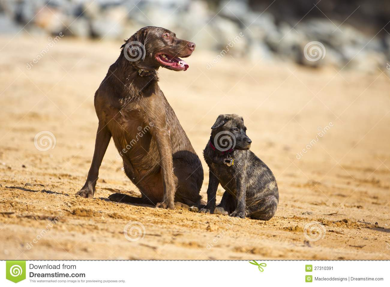 how to bring two dogs together
