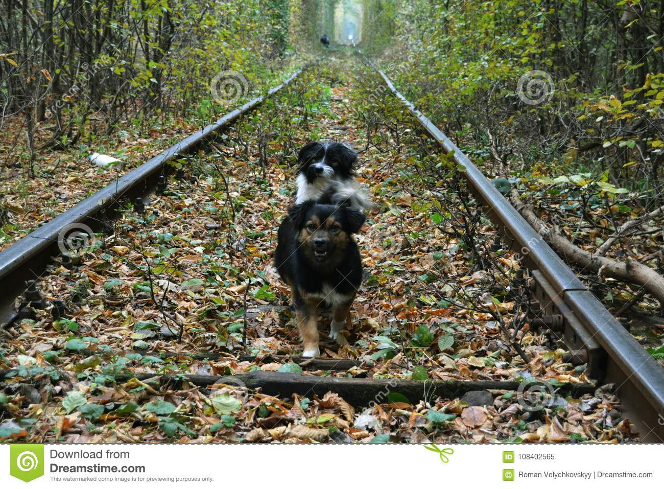 Closeup Of Dog Running On Railroad Track High-Res Stock